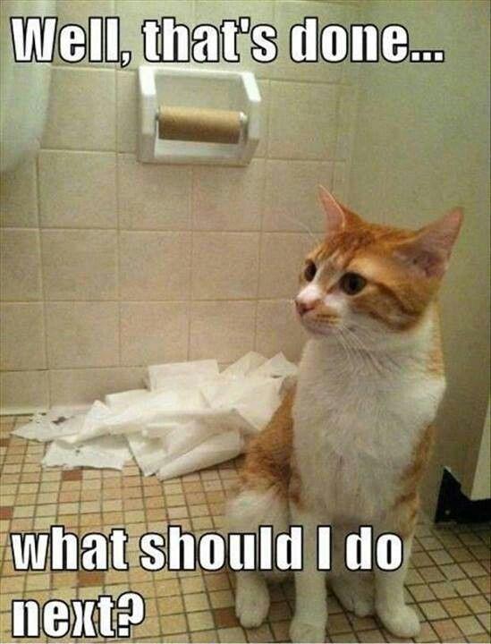 like every cat