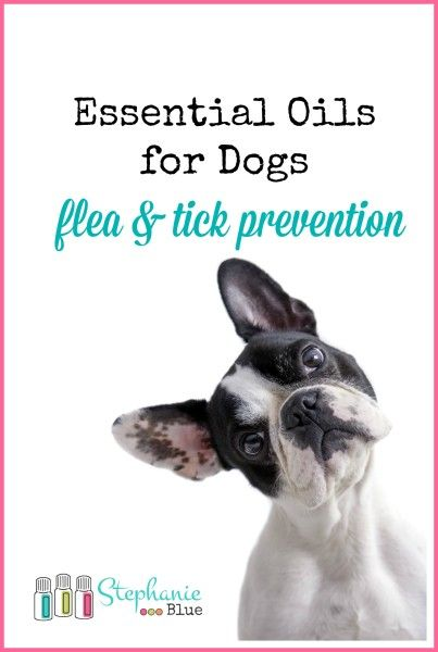 Fleas and ticks.  Oh, my! Essential oils are a safe and natural alternative to the toxic OTC alternatives.  Cheaper, too!