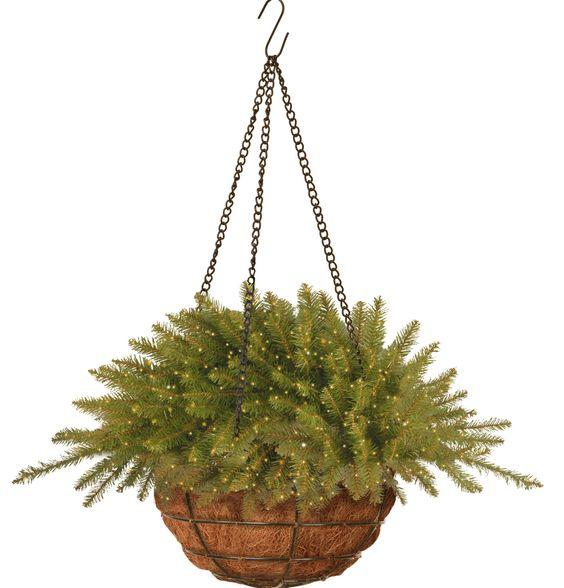 Kingswood Fir Hanging Basket