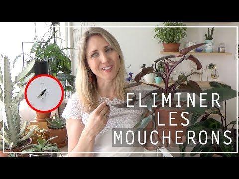 Epingle Par Cynthia Canchon Sur Jardinage En 2020 Avec Images