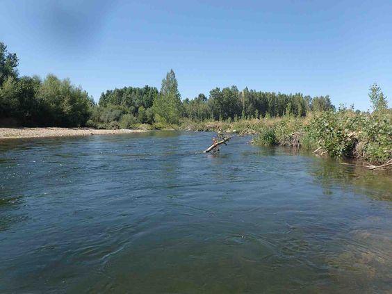 Bonita tabla en el río #Órbigo y con buenas #truchas. https://clicandfish.com/photo