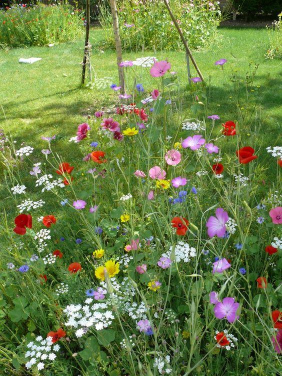 prairie fleurie tout type de sol sur le mur v g tal jardin pinterest boutiques. Black Bedroom Furniture Sets. Home Design Ideas