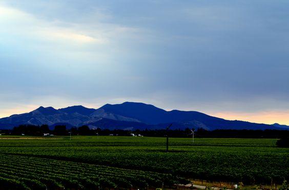 Wine Country, Marlborough