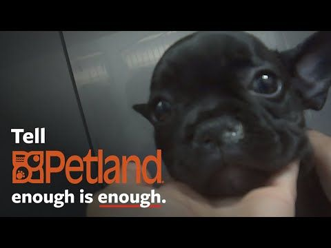 Shocking Undercover Investigation At Petland Youtube Sick