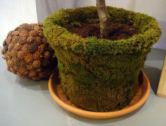 DIY Las macetas para el jardín cubiertas de musgo. Requiere de ...