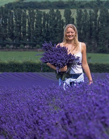 I want to stand in a fleld of lavender: