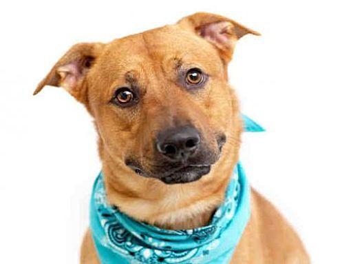 Orlando Fl Labrador Retriever Meet Smokey A Dog For Adoption Pets Kitten Adoption Dog Adoption