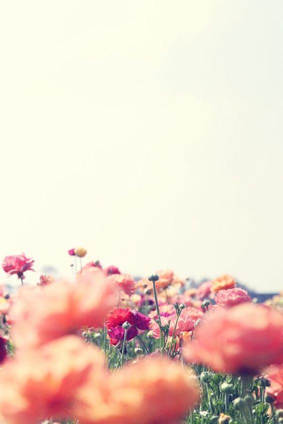 flores e cores!