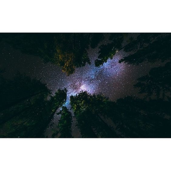 A night in Hanmer Forrest Hanmer Springs. by grovesy.jpg