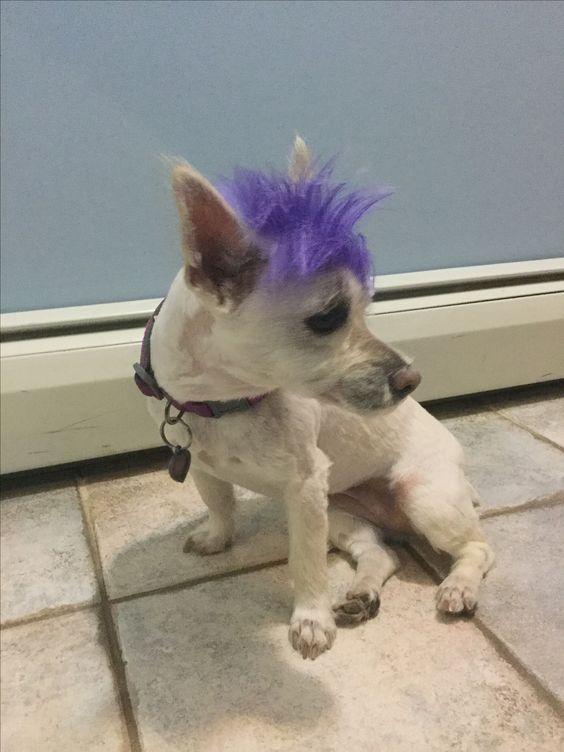 Purple hair 💜