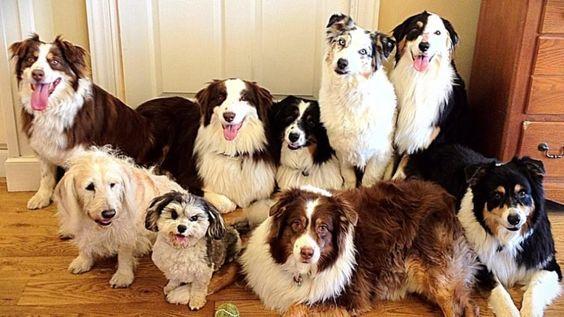 Descubre cual es la raza de perros ideal para ti