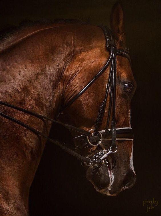Don Quichot | PHOTODINE64 Sandrine Philippe Branquart