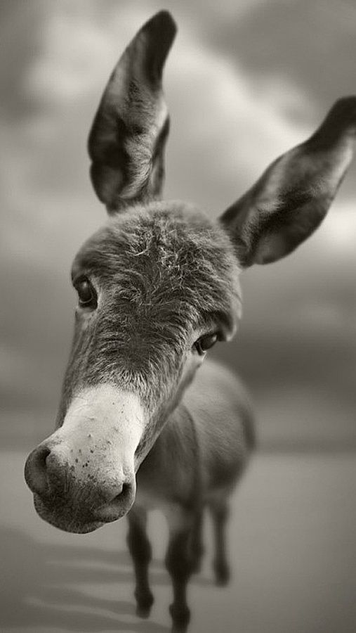 *This* makes me smile. =) sweet sweet little donkey face!! I want to hug this baby!