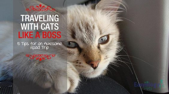 Traveling with #cats Like a Boss – 5 Tips for an Awesome Road Trip! @easyologypets