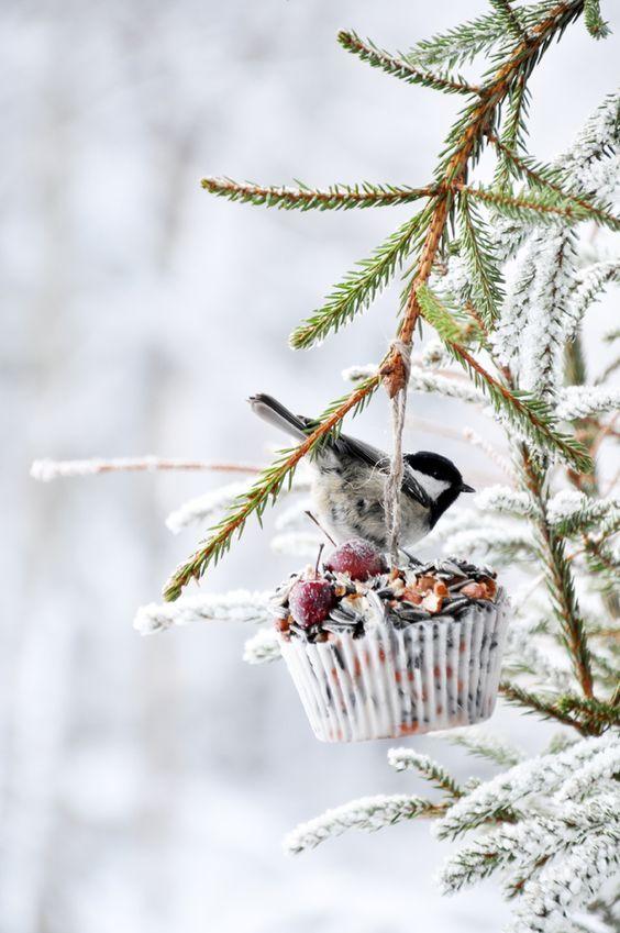 Beautiful winter scene with winter bird in snow in tree