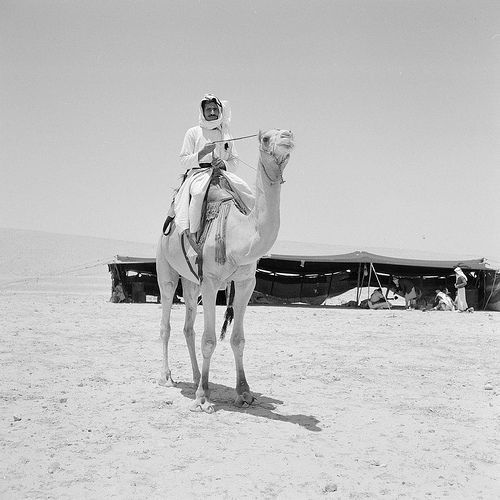 Bedouins in desert: