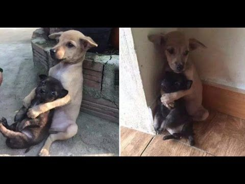 Best Saving Animals Images On Pinterest Animal Rescue Deer - These two stray puppies were just rescued and they refuse to stop hugging each other