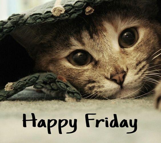 Happy Friday!!! Cute cat hiding <img src=