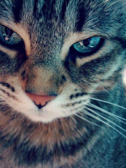 Le regard envoûtant d'un chat  ♥ #regard  #envoûtant  #chat