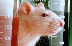 Should animals be used for experimentations? Read it here: http://tinyurl.com/32zf5wt