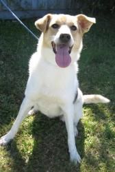 Yahtzee is an adoptable Border Collie Dog in Watertown, CT. Yahtzee is such a sweet heart! She is very loving and playful, and is definitely ready for a loving home! This dog is spayed/neutered, up to...