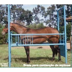 tronco de contenção de equinos - brete