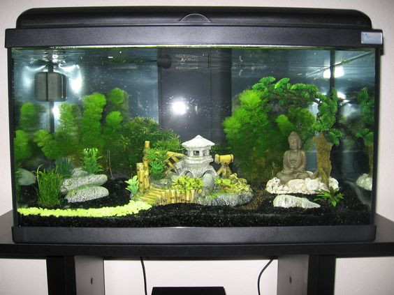 Aquarium avec d coration asiatique d coration zen for Decoration pour aquarium d eau douce