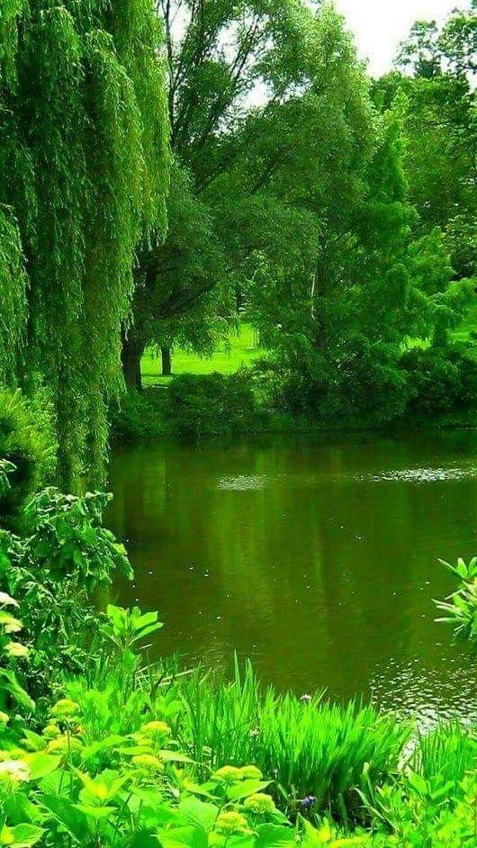 Yesillik Green Nature Beautiful Nature Beautiful Nature Wallpaper