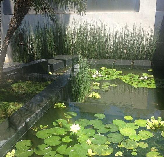 Modern koi pond in hollywood hills ca koi pinterest for Modern koi pond