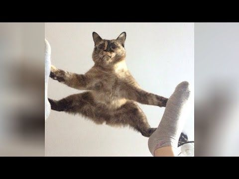Many People Always Ask Is Why Cats Are So Funny The Answer Is Little Bit Confusing But In My Openion Cats Is The Funny Cat Videos Funny Cats Funny Cat Memes