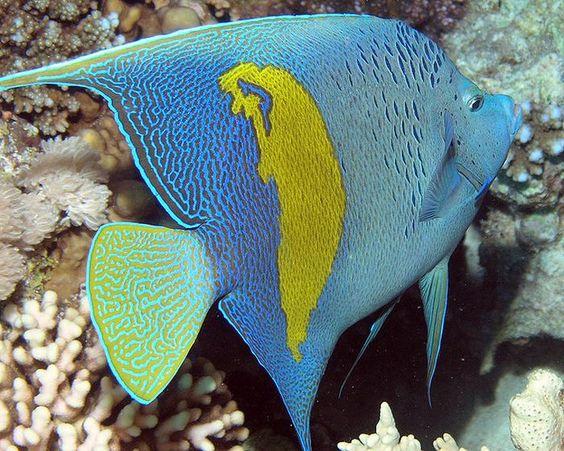 ... fish colorful fish fish shy m aquarium a beautiful other beautiful