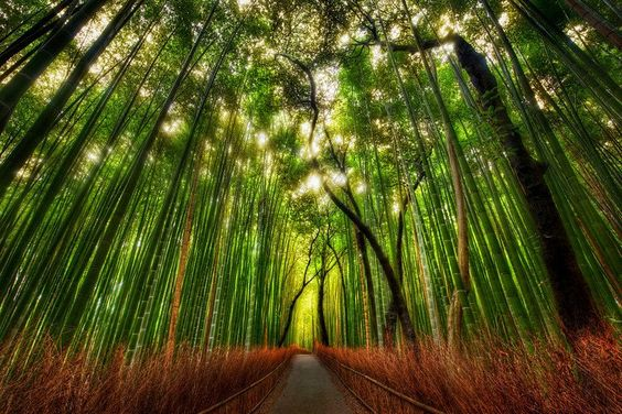 gorgeous: Trey Ratcliff, Favorite Places Spaces, Beautiful Places, Bamboo Forest, Hdr Photography, Sagano Bamboo, Kyoto Japan