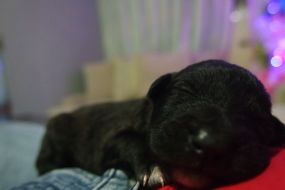 Reflect that peace ,is a gift !   little puppy.. :·3