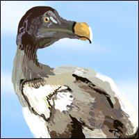 The Dodo - an extinct bird.