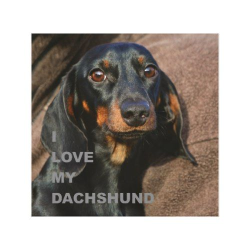 Dachshund Black And Tan Love W Pic Canvas Print Zazzle Com