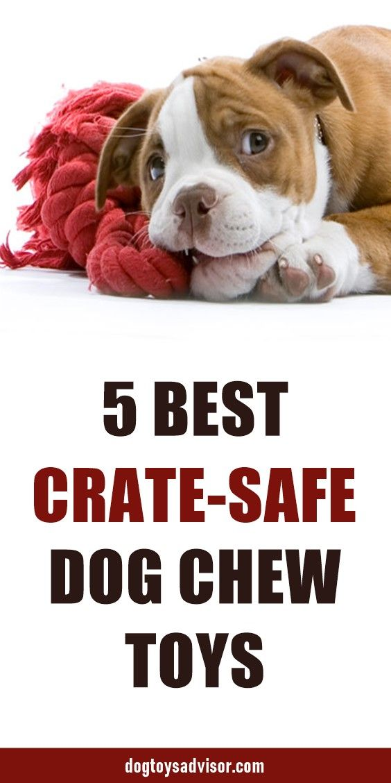 Here Are The 5 Best Crate Safe Chew Toys For Dogs These Toys Will