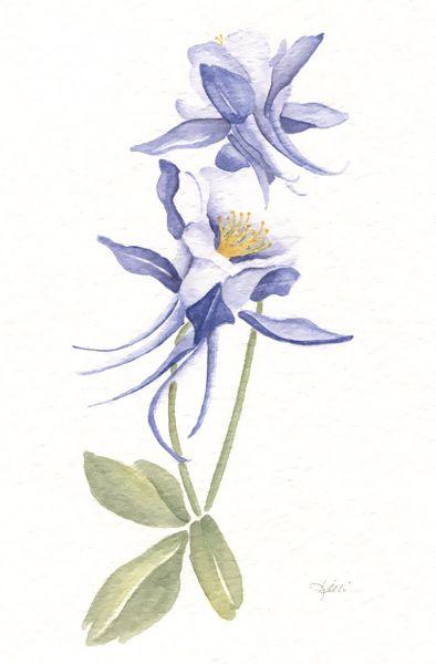Columbine Flower Line Drawing : Columbines art by kelli my watercolor pinterest