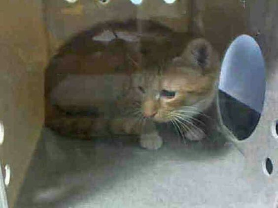 Poor Angel is at Brooklyn ACC shelter and will die at noon tomorrow  because she is afraid..she his healthy  and sweet..please save her life..visit pets on death row on Facebook URGENT