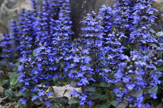 flores azules - Buscar con Google
