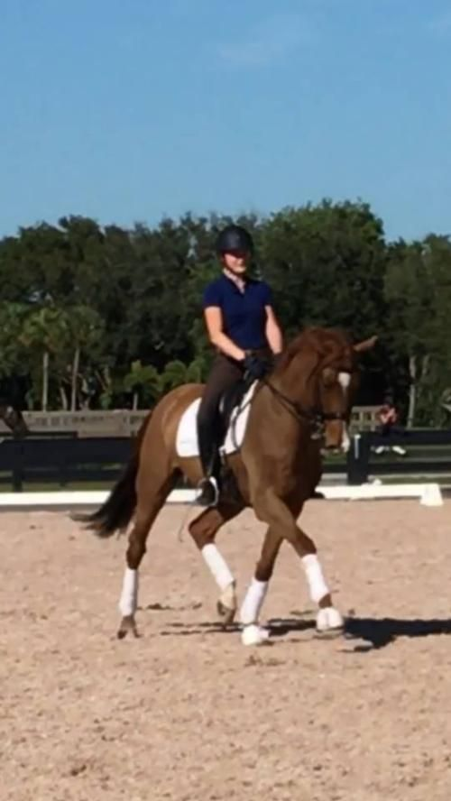 Brahm: 16.2hand chestnut 2006 KWPN gelding. Brahm is a fabulous FEI horse working Intermediare I and beyond with ease. He has natural talent for...