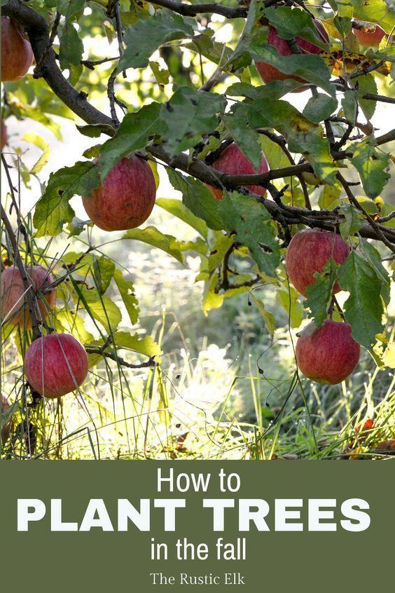 Ultimate Guide To Planting Trees In The Fall Trees To Plant Plants Gardening For Beginners