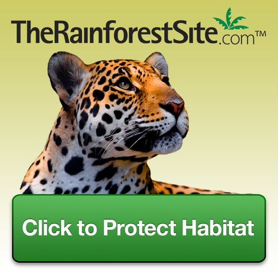 Click To Give @ The Rainforest Site This is free to do.
