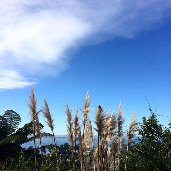 Crisp blue skies in Laingholm