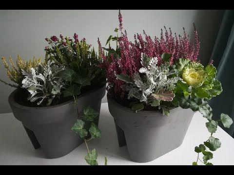 Kwiaty Jesienne Na Balkon Co I Jak Posadzic Youtube Plants