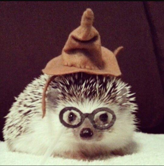Hello, I'm Hedgie Potter: