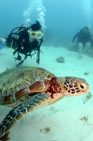 Cairns,  Australia...spent 4 days on a boat learning to scuba dive at the Great Barrier Reef. I did swim with turtles this size. Amazing!