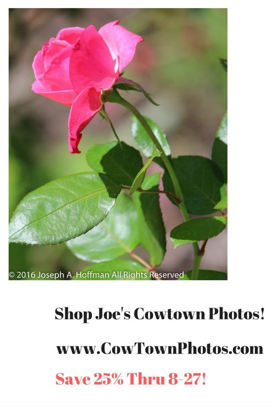 Prints Photos Sale Deals Bargains Home Decor Gift Ideas Flowers Scenery Landscapes