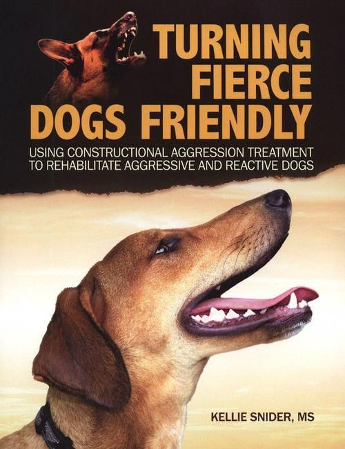 Eloquent Executed Stop Dog Aggression Reactive Dog Aggressive