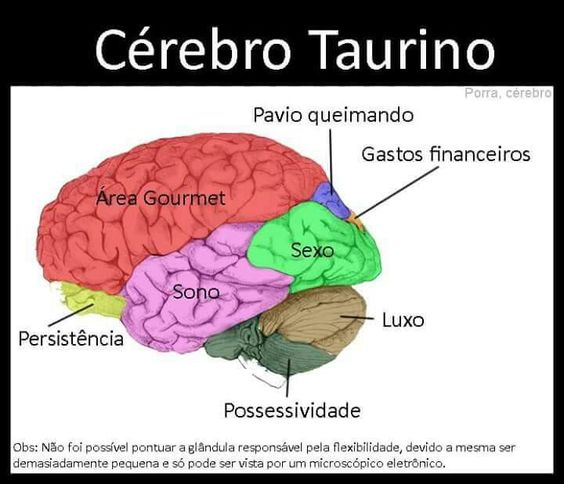 Cérebro Taurino