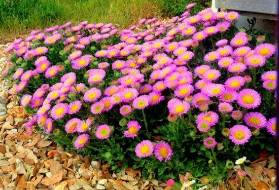Herbstblumen Fur Einen Garten Voller Farben Herbstblumen Herbstpflanzen Und Garten